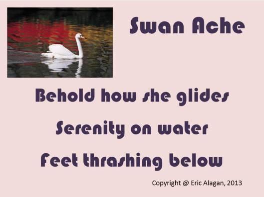 Swan Ache